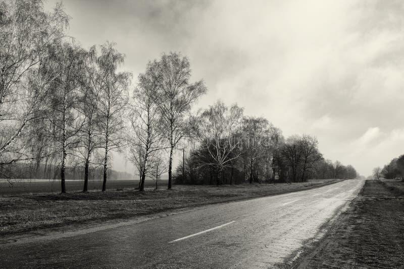 Czarnej białej fotografii wsi pusta droga, brzozy drzewa las, chmurny pogoda krajobraz zdjęcia royalty free