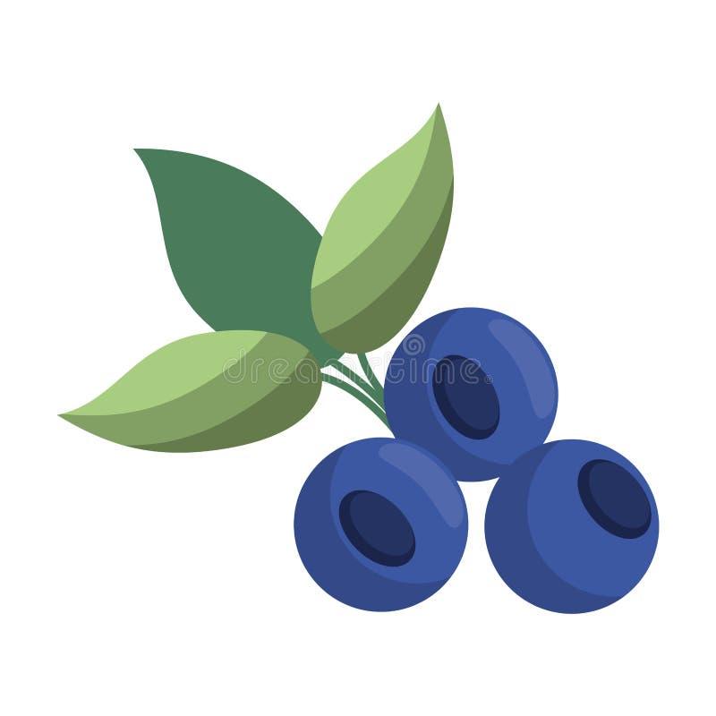 Czarnej jagody owoc świeża żywność ilustracji