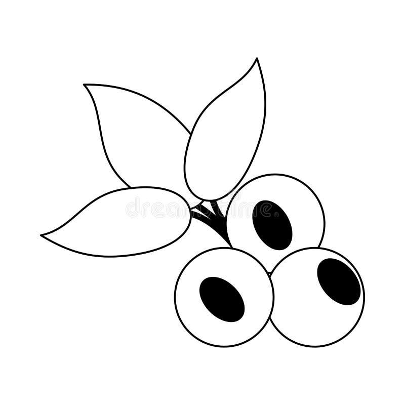 Czarnej jagody owocowa świeża żywność w czarny i biały ilustracji