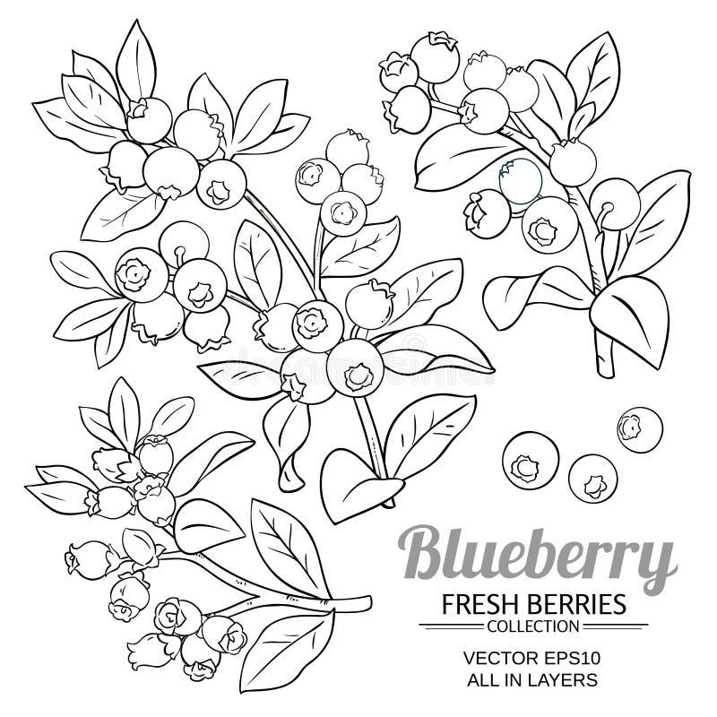 Czarnej jagody rośliny wektor ilustracji