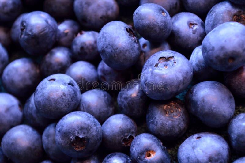 Czarnej jagody tło organicznie czarne jagody w lecie zdjęcia stock