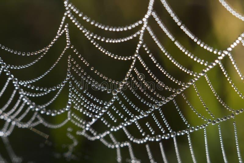 czarnej perły? zdjęcie royalty free