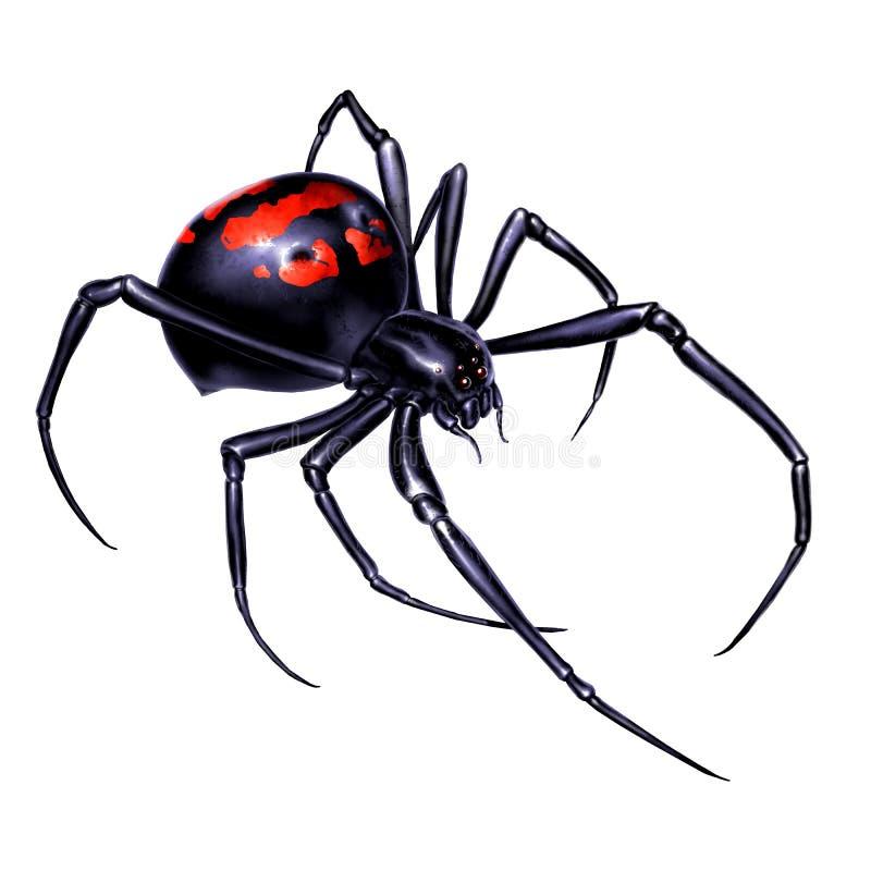 Czarnej wdowy paj?k na bia?ego t?a realistycznej ilustracji odizolowywa Czarnej wdowy paj?ka zab?jca jest niebezpieczny i royalty ilustracja