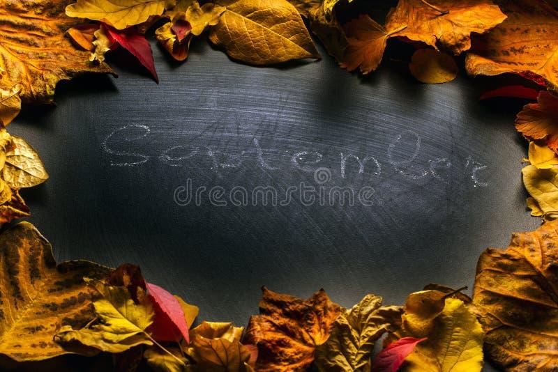 Czarni chalkboard jesieni liście pracowniani zdjęcia royalty free