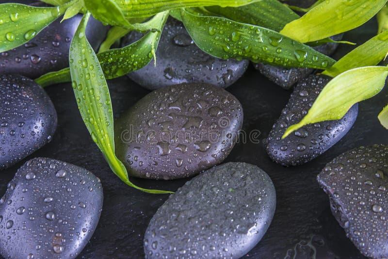 Czarni masaży kamienie i zielone bambus gałązki zakrywający wodnym dro obraz royalty free