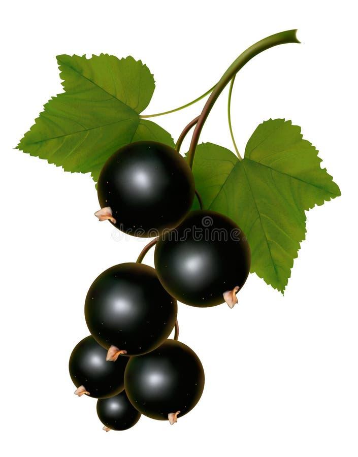 Czarni rodzynki z liśćmi. royalty ilustracja