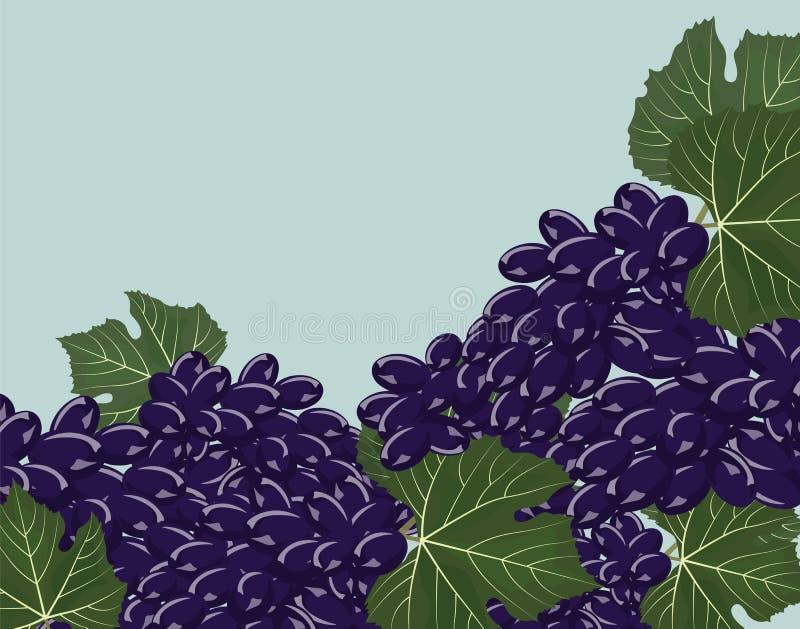 Czarni winogron grona royalty ilustracja
