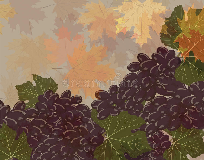 Czarni winogron grona ilustracja wektor