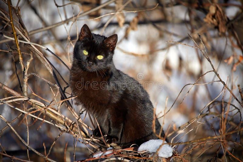 czarny śliczna figlarka zdjęcia stock