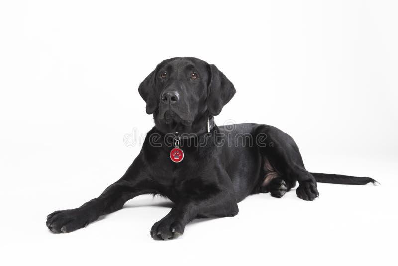 czarny śliczny psi lying on the beach fotografia royalty free