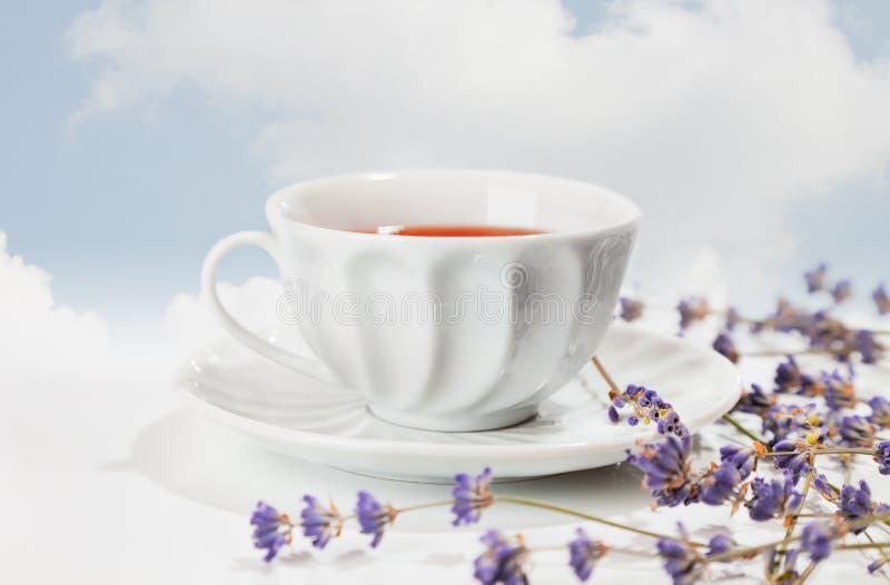 czarny świeża lawendowa herbata obraz royalty free