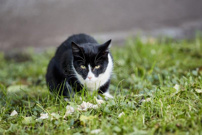 Czarny bezdomny kot patrzeje kamerę obraz royalty free