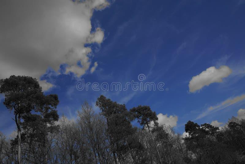 Czarny biały błękitny łąkowy niebo i las fotografia royalty free