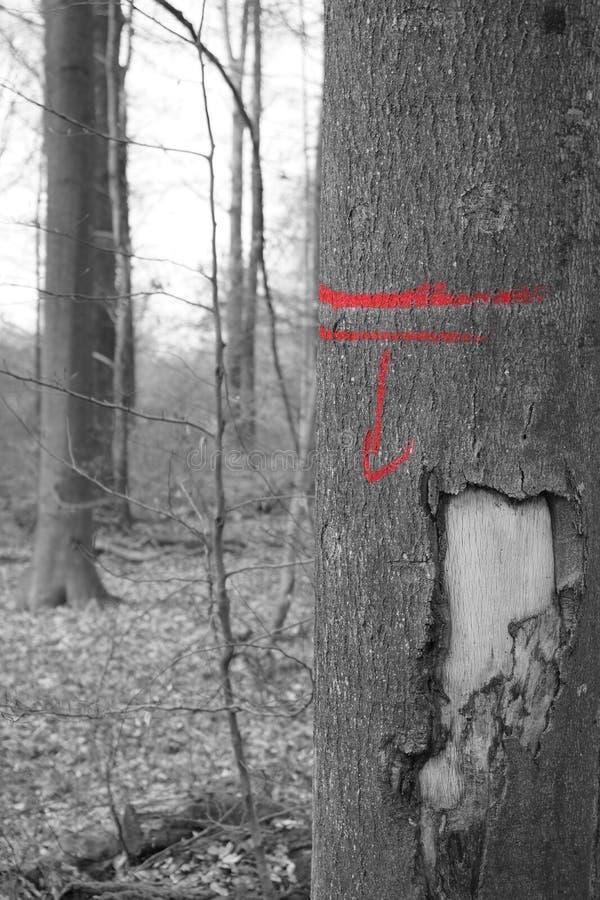 Czarny biały czerwony drzewo ciąć zdjęcie stock