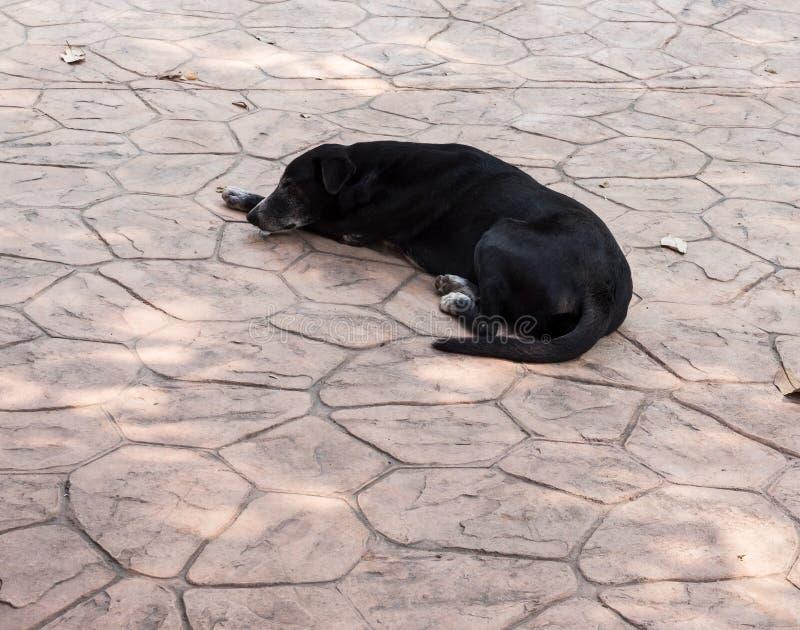 Czarny bolączka pies śpi na betonowej podłoga obrazy royalty free