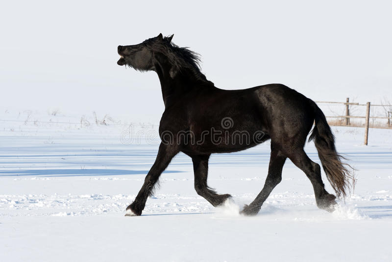 czarny cwału końska bieg zima zdjęcia stock