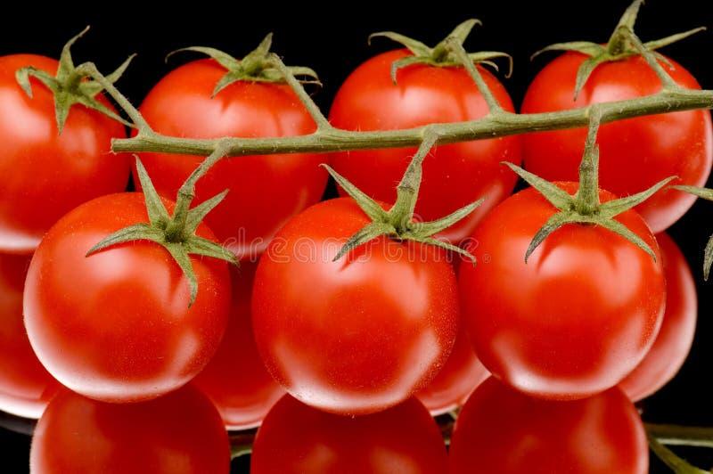 czarny czerwony pomidor zdjęcie royalty free