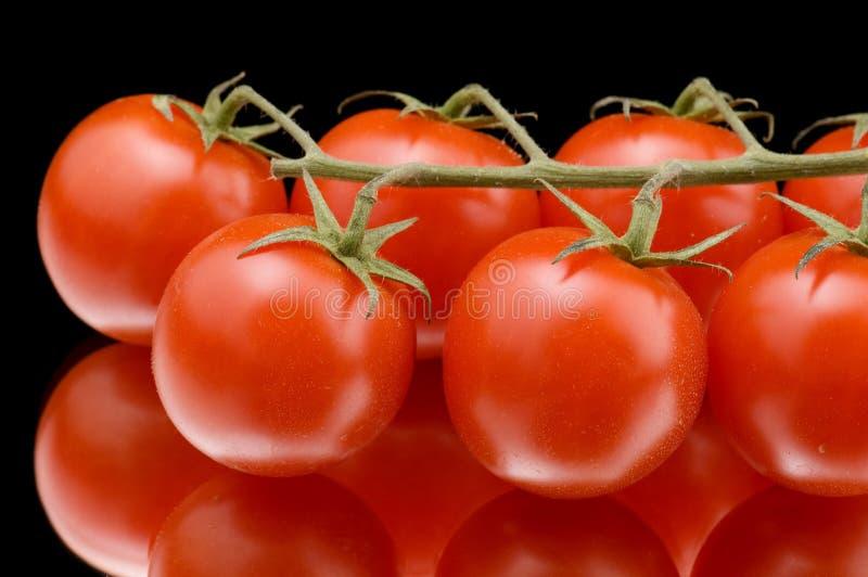 czarny dojrzały pomidor zdjęcia stock