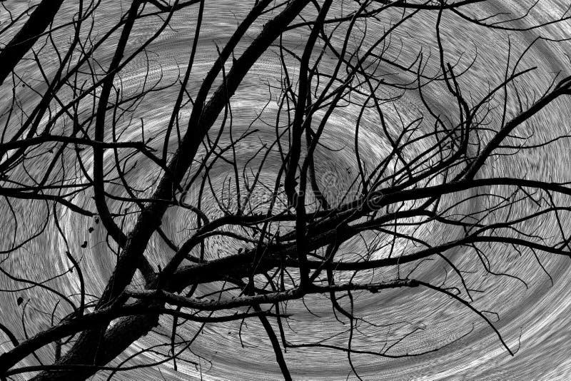 Czarny drzewa i spirali tło ilustracji