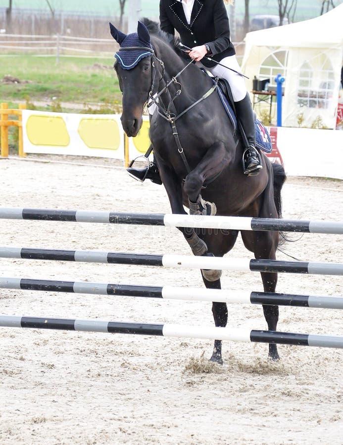 czarny equestrian konia doskakiwanie zdjęcie royalty free