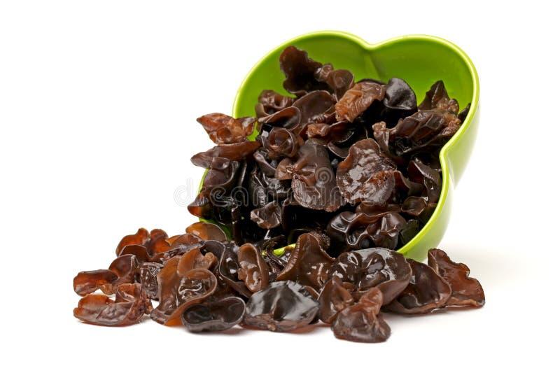 Czarny grzyb zdjęcie stock