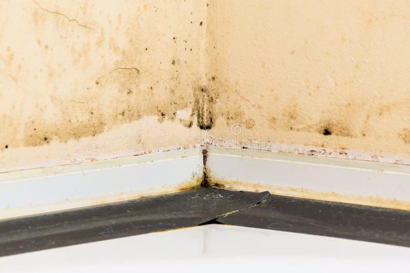 Czarny grzyb na ścianach obraz stock