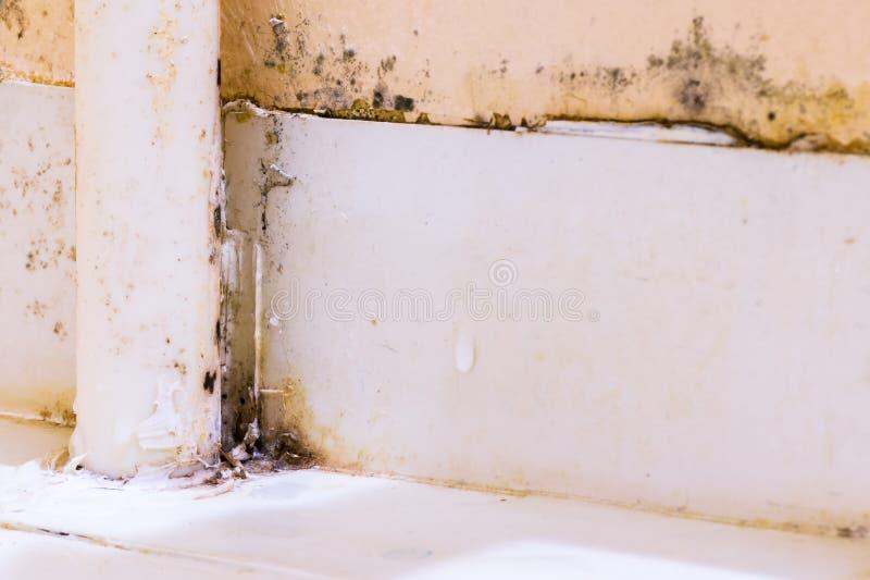 Czarny grzyb na plastikowych tubkach obraz stock