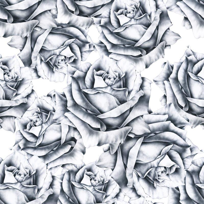 Czarny i biały ilustracja wzrastał kwiaty Handwork monochromatyczny rysunkowy ołówek Bezszwowy wzór w romantycznym stylu dla proj royalty ilustracja