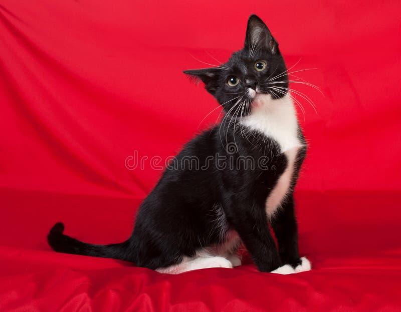 Czarny i biały łaciasta figlarka siedzi na czerwieni zdjęcie royalty free