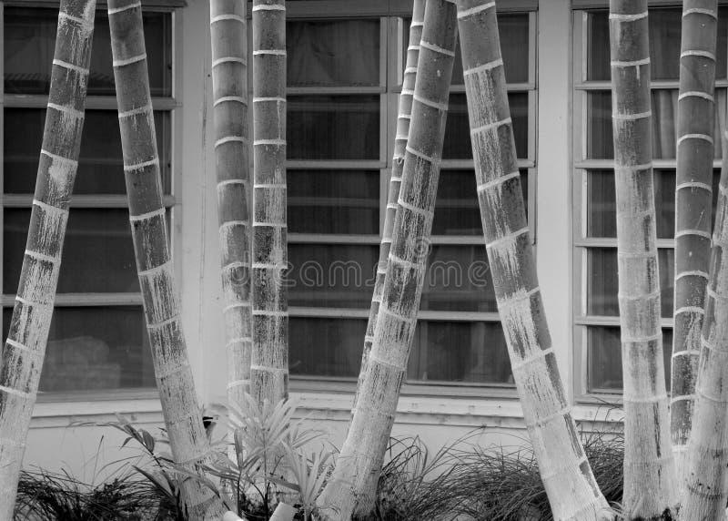 Czarny i biały abstrakt upierścieneni drzewko palmowe bagażniki przeciw liniom paned szklani okno obraz royalty free
