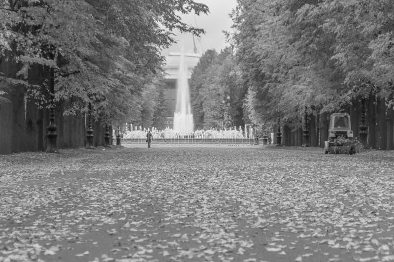 Czarny i biały droga z spadać liśćmi w parku w jesieni zdjęcie stock