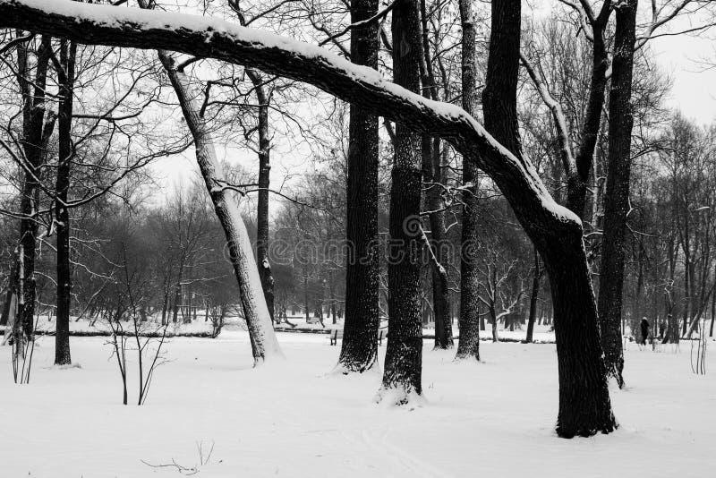 Czarny i biały drzewa obrazy stock