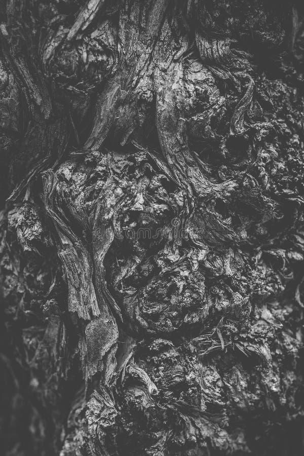 Czarny i biały drzewny trzon w górę obraz stock