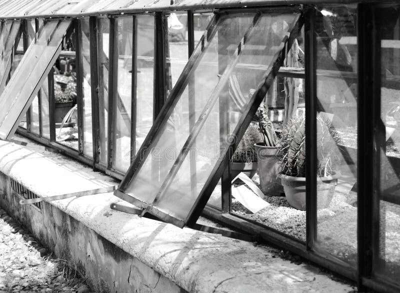 Czarny I Biały fotografia szklarnia z kaktusami obrazy stock