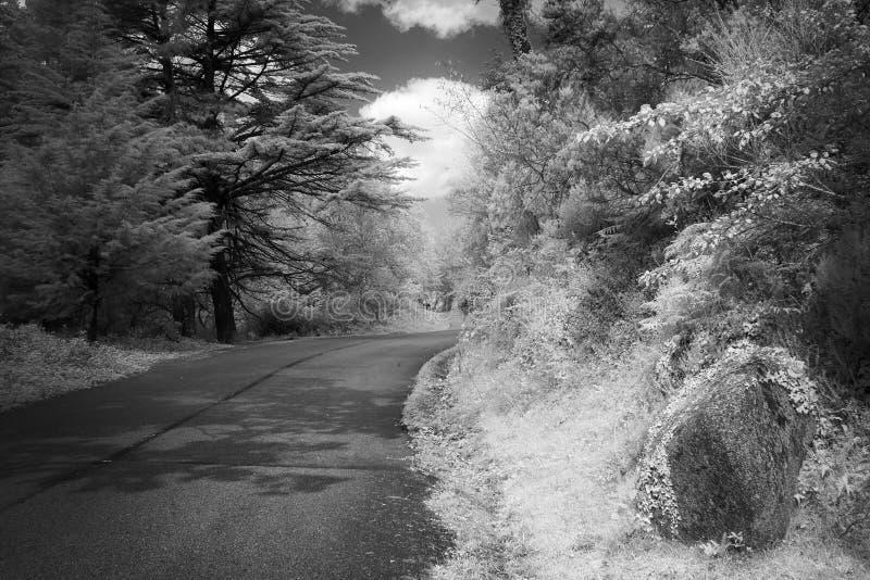Czarny i biały halna lasowa droga zdjęcia royalty free