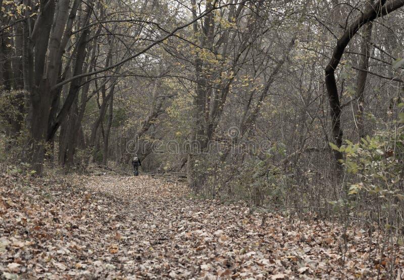 Czarny i biały jesień krajobraz zdjęcie stock