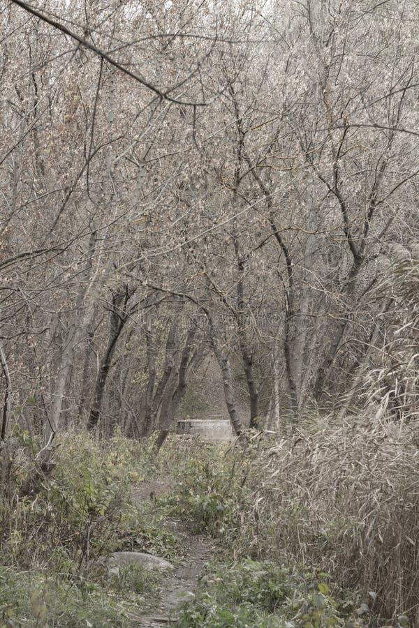 Czarny i biały jesień krajobraz obrazy royalty free