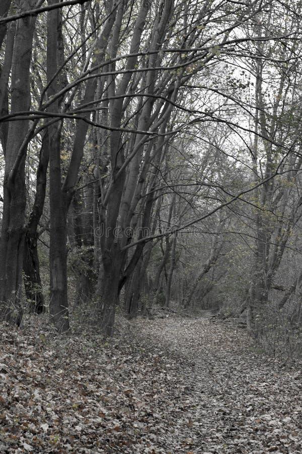 Czarny i biały jesień krajobraz obraz stock