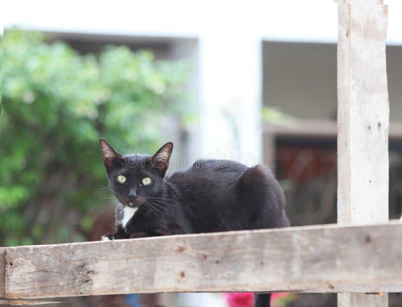 Czarny i biały kot kłaść w dół na kwadratowym drewnie obraz royalty free