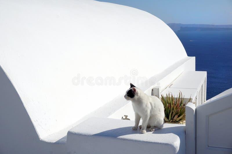 Czarny i biały kot w Oia, Santorini zdjęcie royalty free