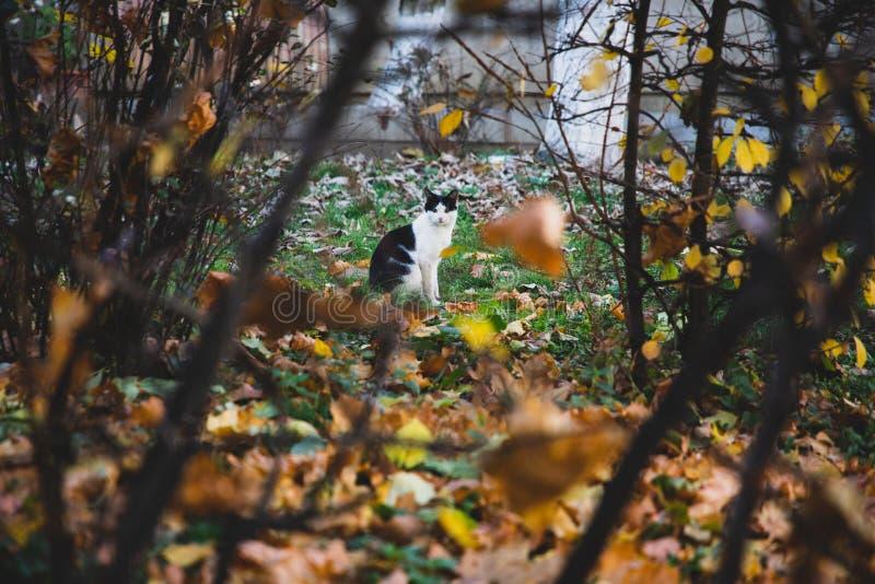 Czarny i biały kot widzieć między roślinnością zdjęcie royalty free
