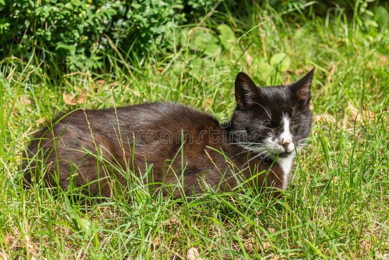 Czarny i biały kota lying on the beach w zielonej trawy oczach zamykających zdjęcie royalty free