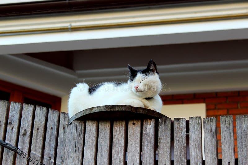 Czarny i biały kota obsiadanie na ogrodzeniu z oczami zamykającymi zdjęcia royalty free