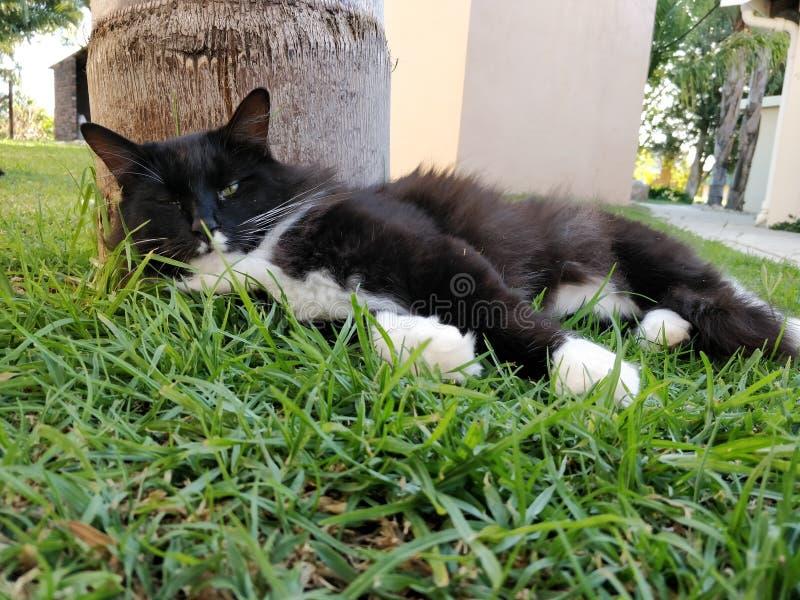 Czarny i biały kota snoozing outside obraz stock