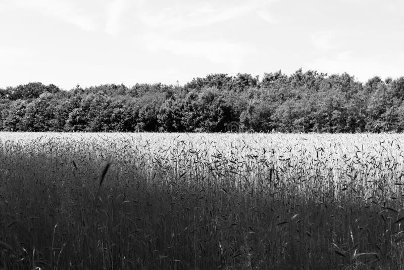 Czarny i biały obrazek holendera krajobraz fotografia stock