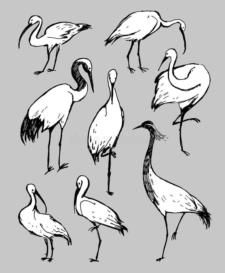 Czarny i biały ptaki bocian, czapla i shadoof na szarość, ilustracja wektor