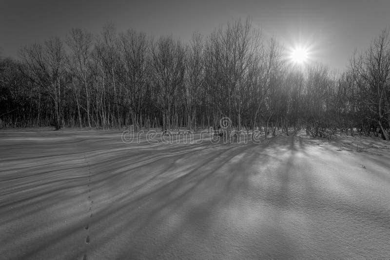 Czarny i biały scena zakrywająca z śniegiem las zdjęcia stock