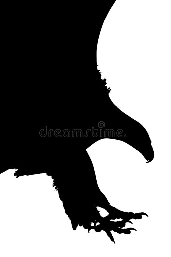 Czarny i biały sylwetka napadanie orzeł z otwartymi pazurami i otwartym belfrem obraz royalty free
