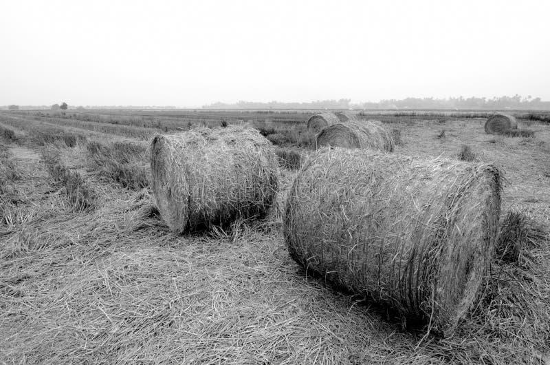 Czarny i biały wizerunek irlandczyk słoma tło zdjęcie royalty free