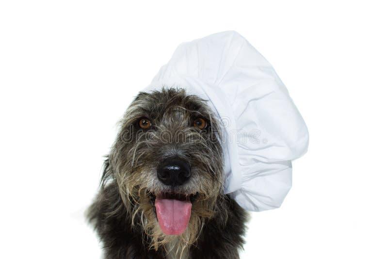 CZARNY I DUŻY pies Z szefa kuchni kapeluszem ODIZOLOWYWAJĄCYM NA BIAŁYM tle ST zdjęcie royalty free